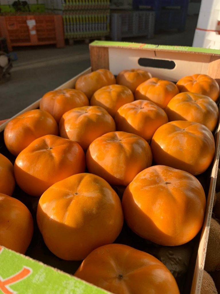 persimmons2